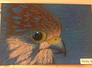 my falcon lol